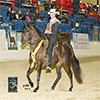 Cintas Sin Par at 2014 Grand National Show. Owner Judi Bradbury