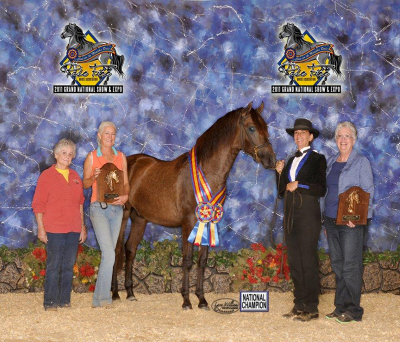 2011 National Champion 		Breeders Sweepstakes Colts
