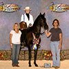 Perla Negra de las Toscas. National Champion Pleasure Junior owned by Cecilia Barfield